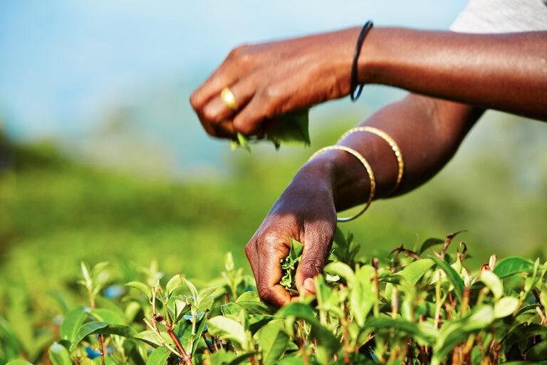 Fairtrade Lünen